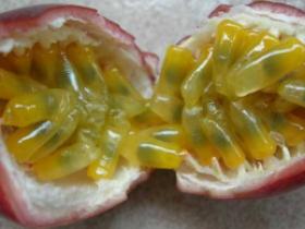 百香果和梨子能一起吃吗