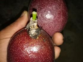 胆结石可以吃百香果吗