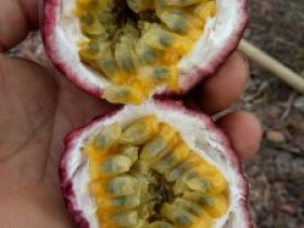 癌症患者可以吃百香果吗,吃百香果籽致癌吗