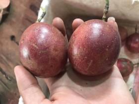 上海适合种百香果吗