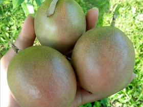百香果大量上市,为什么市场上买不到优质的水果