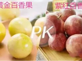 冬季百香果变酸是什么原因