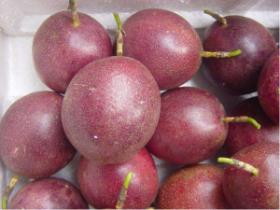 百香果能与芝麻和板粟一起吃吗