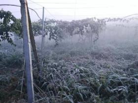 冷空气来袭,百香果种植户能做什么