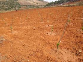 百香果夏季种植技术,另一种模式