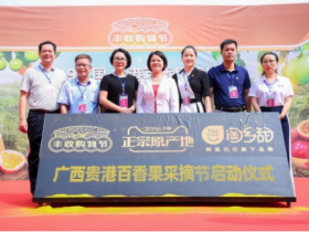 广西贵港百香果采摘节启动,1小时卖光20吨百香果