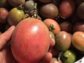 百香果吃一个月能瘦多少斤,吃百香果一个月的效果