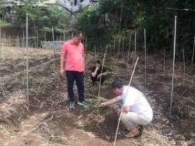 普安县云庄村种下百香果,植出新希望
