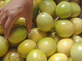 百香果种苗发生变异,公司质疑种植致变异