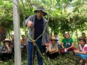 五指山开展百香果高效栽培技术服务与培训