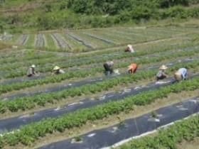 贵州省榕江县寨蒿镇,套种模式助力百香果产业增收