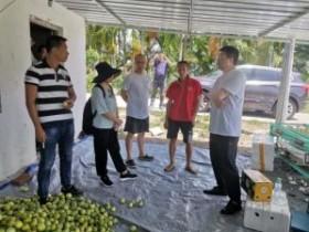 九三学社热科院社员赴琼中县进行百香果产业指导及病毒检测