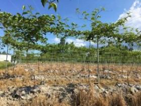 保丰收罗坑镇百香果园种植户科学用水