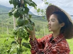 云南晋宁有个百香果村卖鲜果还能卖风景