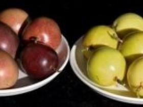 福建漳州小小黄金百香果,帮助果农一年增收3000万元