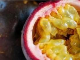 贵州精品水果百香果品鉴会,本周六新鲜来袭