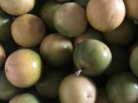 泉州市种植业管理站设立泉州综合试验百香果推广