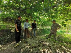 省水果产业技术体系岗位专家到尤溪调研指导百香果生产