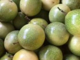 安龙县利优利种植农民专业合作社百香果种植基地