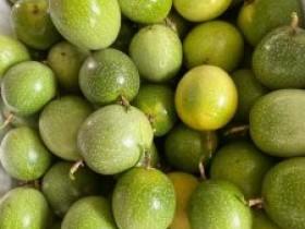 什么原因造成百香果新品种选育停滞不前