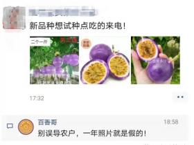 百香果新品种,台农升级版还居然有人深信不疑