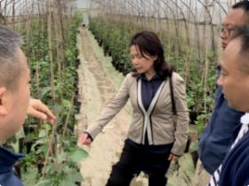 榕江县一张产业蓝图到底,坚定百香果产业发展信息