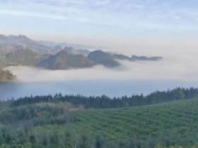 百香果海拔多少可以种植