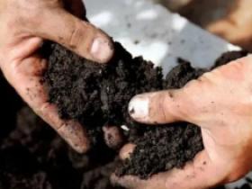 腐殖酸的功效是什么,能改良百香果土壤,让肥料效果翻倍