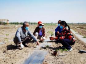 福建三明农业专家在玛纳斯县成功繁育百香果种苗