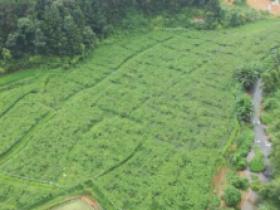 武平首批百香果丰收上市,预计产量2万吨