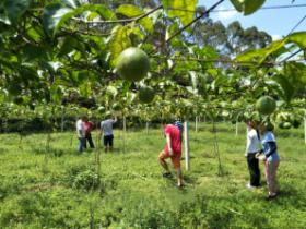 茂名两百亩百香果基地促农增收
