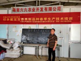 五指山毛道乡加强种植技术培训助推百香果产业发展
