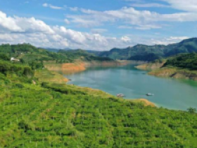 万峰湖镇5000亩百香果成熟上市