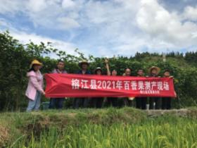 黔东南州百香果产业持续稳步发展