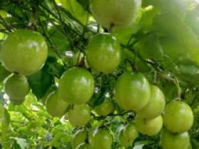 江西赣州夫妇种植百香果卖货一年卖出2000多万