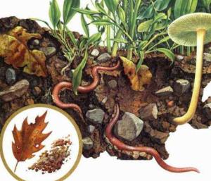 百香果盆栽有蚯蚓怎么办