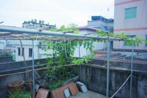 百香果盆栽要多大的盆