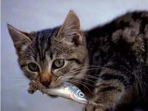 猫可以吃百香果吗