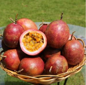 百香果在重庆能种植吗