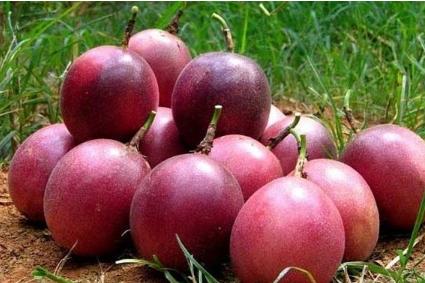 百香果收购价格多少钱一斤