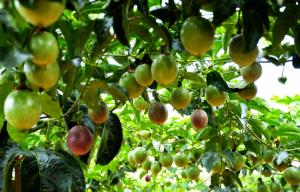 新开百香果园需要预防什么吗