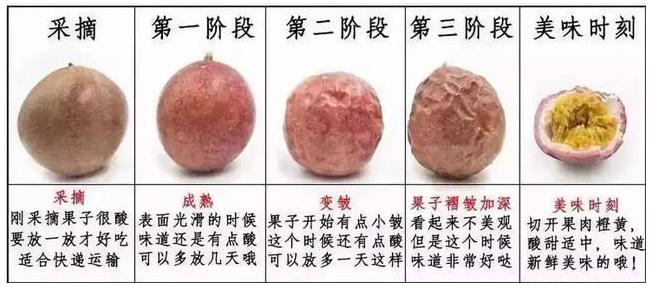 百香果为什么会皱皮