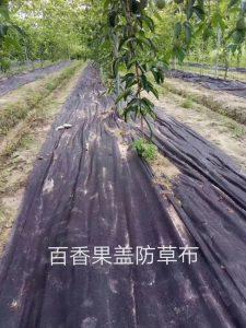百香果园7种除草方法,哪种最好