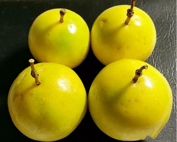 如何挑选黄金百香果,黄金果好与不好的5个标准