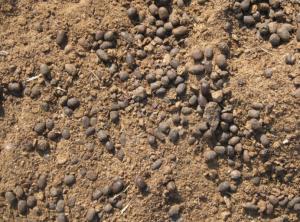 百香果能用羊粪施肥吗
