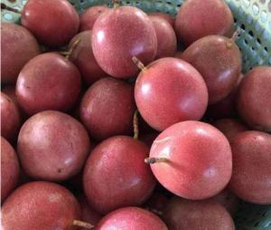 百香果和豆浆可以一起喝吗