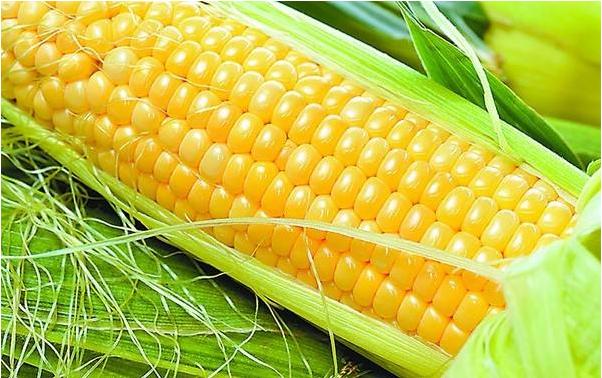 玉米和百香果可以一起吃吗