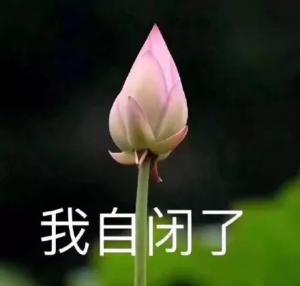 百香果光长枝叶,不开花,它在想什么
