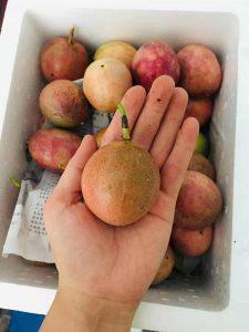 国内百香果卖出进口,百香果的价钱他是怎样做到的