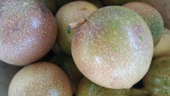 百香果哪种品种好,紫果,黄果,满天星哪种最赚钱